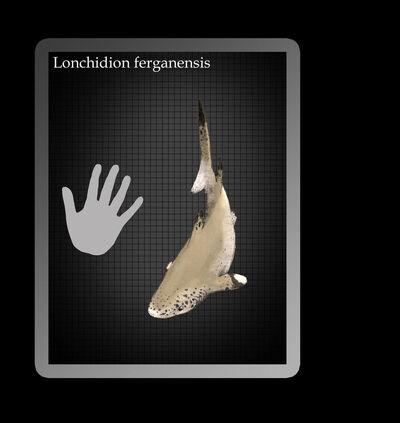 Lonchidion by hyrotrioskjan-d4t4bum.jpg