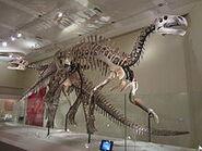 Skeletons of Lanzhousaurus magnidens and Jintasaurus meniscus