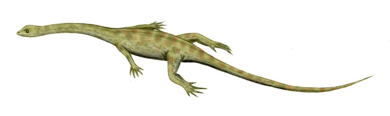 Hyphalosaurus