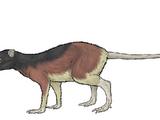 Macrocranion