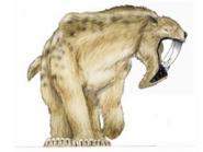 JPI Thylacosmilus