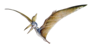 TLWJP male Geosternbergia sternbergi concept