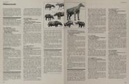 Rhinoceros facts