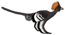 Anchiornis awesome.png