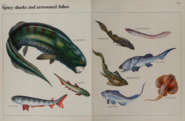 Spiny Sharks And Armored Fish collection
