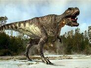 Wwdt-rex