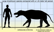 Amphicyon-size