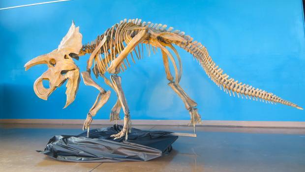 Avasaurus