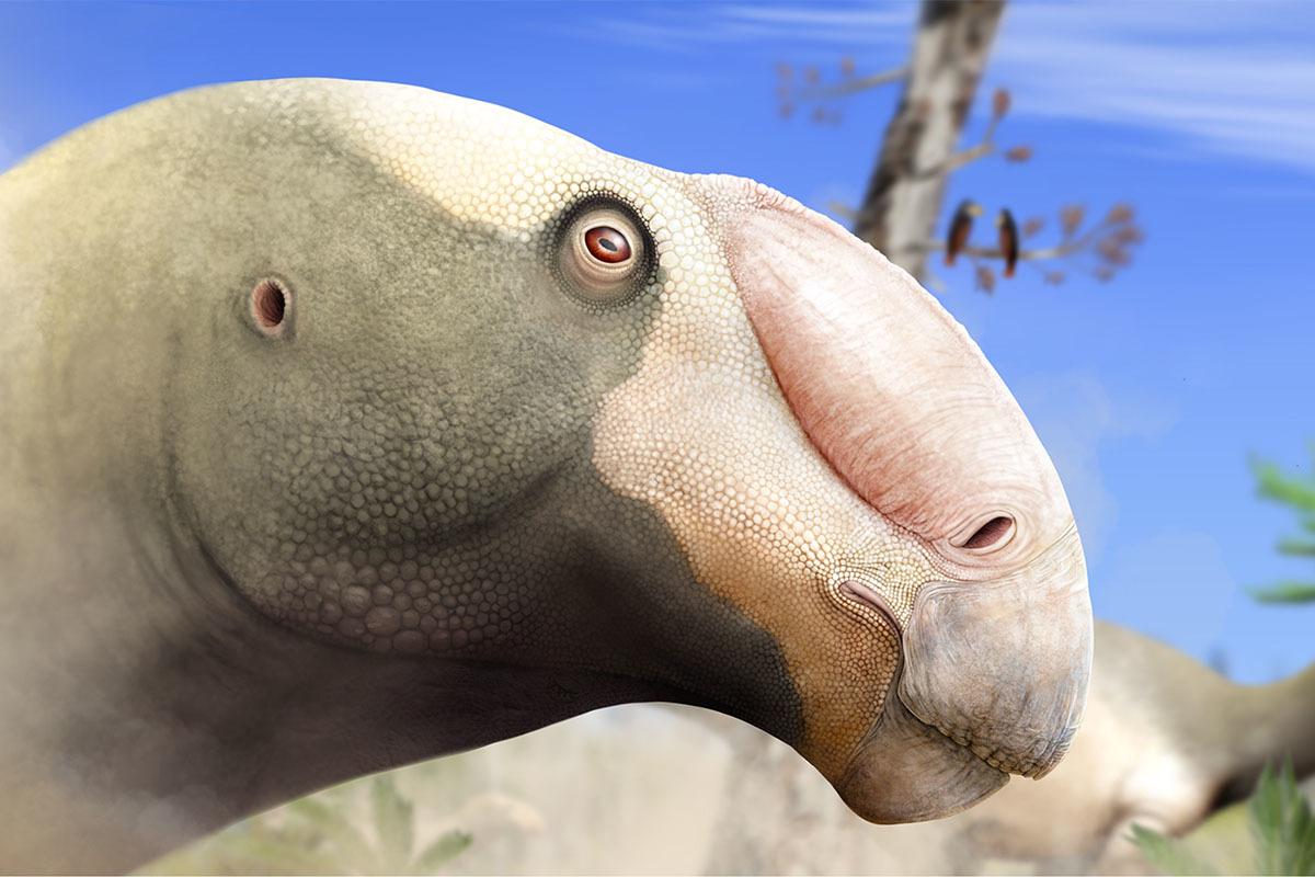Choyrodon