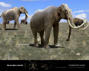 Columbian Mammoth