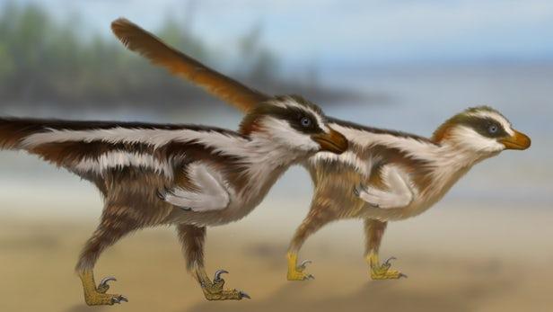 Dromaeosauriformipes