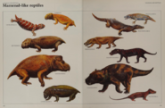 Mammal like reptile collection 2