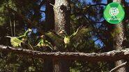 Dinosaurs 4K CONFUCIUSORNIS - the oldest bird with beak Dinosaur video NEW PREHISTORY