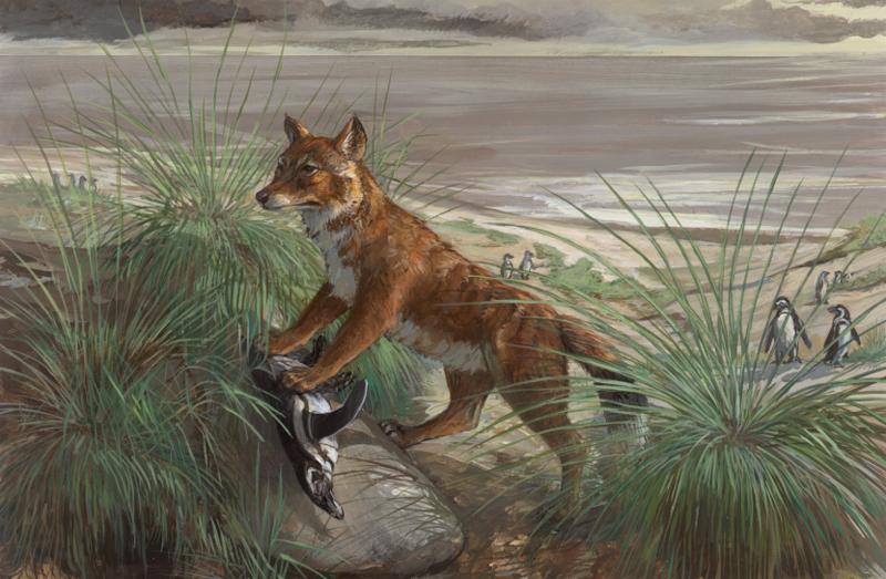 Falkland Islands wolf