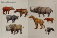 Tapir and brontothere collection