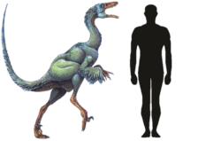 Troodon Size Comparison.png