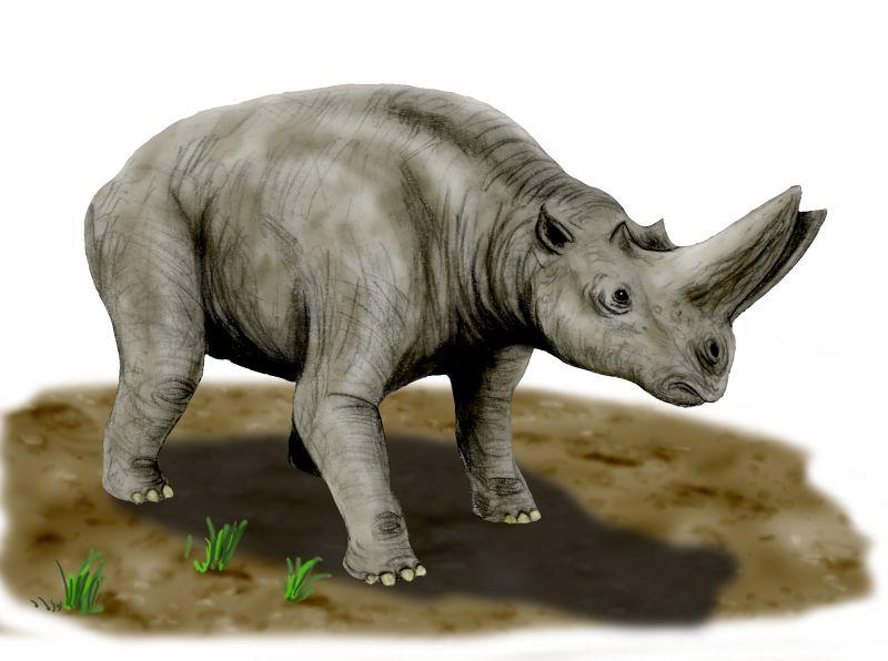 Arsinoitherium