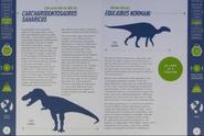 Carcharodontosaurus and Equijubus