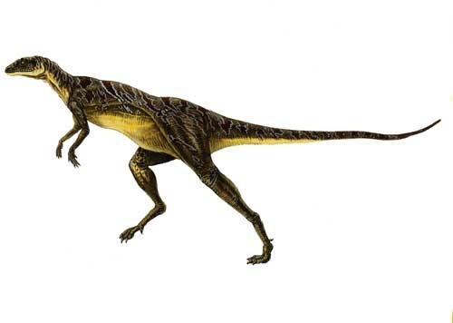 Lesothosaurus/Gallery
