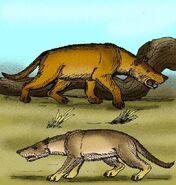 800px-hyaenodon gigas-608x640