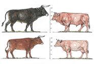 Bull-cow-auroch-cattle-comp