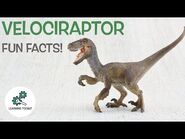 VELOCIRAPTOR FACTS! - Fun & Educational - Dinosaurs For Kids - Best Dinosaur Facts