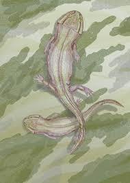Leptoropha