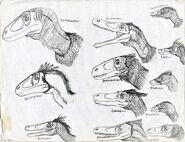 Dromaeosaurus Feather diversity
