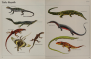 Early diapsids collection