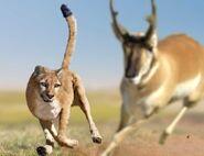 Prehistoric Cheetah