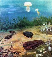 Cambrian Period Trilobites.jpg