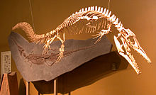 Halisaurus