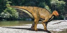 Koshisaurus NT.jpg