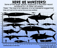 Megalodon and other sea creatures size comparison
