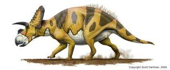 Ceratopsian-1-.jpg