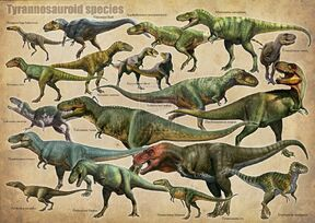 Tyrannosauroid species.jpg