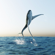 Restoration of Aquilolamna jumping out of water