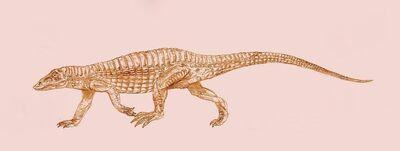 Aetosaurus by Kahless28.jpg