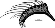Skeletal reconstruction of Bajadasaurus