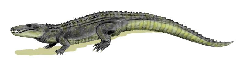 Mahajangasuchus