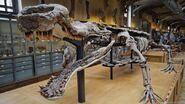 Nihan fossil 2