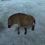 610px-Hyena