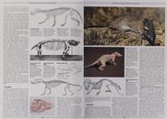 Mammal Like Reptiles and Mammals3