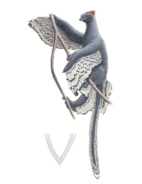 Art depiction of Anchiornis with contour feathers