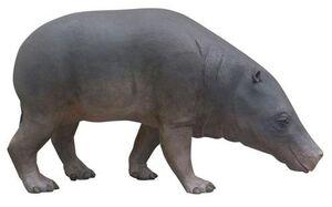 Paleonto vayres5.jpg
