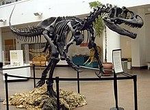 Allosauridae