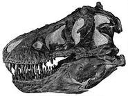 220px-Tyrannoskull