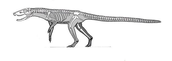 Dromicosuchus