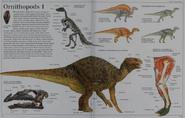 Ornithopods 1