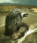Argentavis-perched-on-the-carcass-jan-sovak